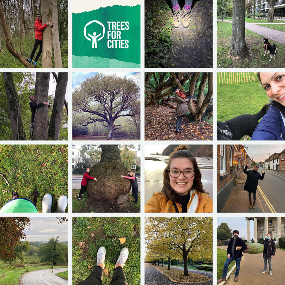 Charity Challenge Delivers New Trees for London